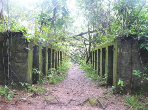 Mars 2006 : Les vestiges du camp de Crique Anguille, appelé aussi « bagne des Annamites », affecté aux détenus indochinois, sont aujourd'hui perdus au cœur de la forêt guyanaise. On distingue sur ce cliché des cellules de réclusion, bâties sur le modèle des cellules de l'île Saint-Joseph. © Thomas Sagnimorte